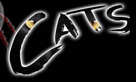 Cats Jnr Workshop banner image