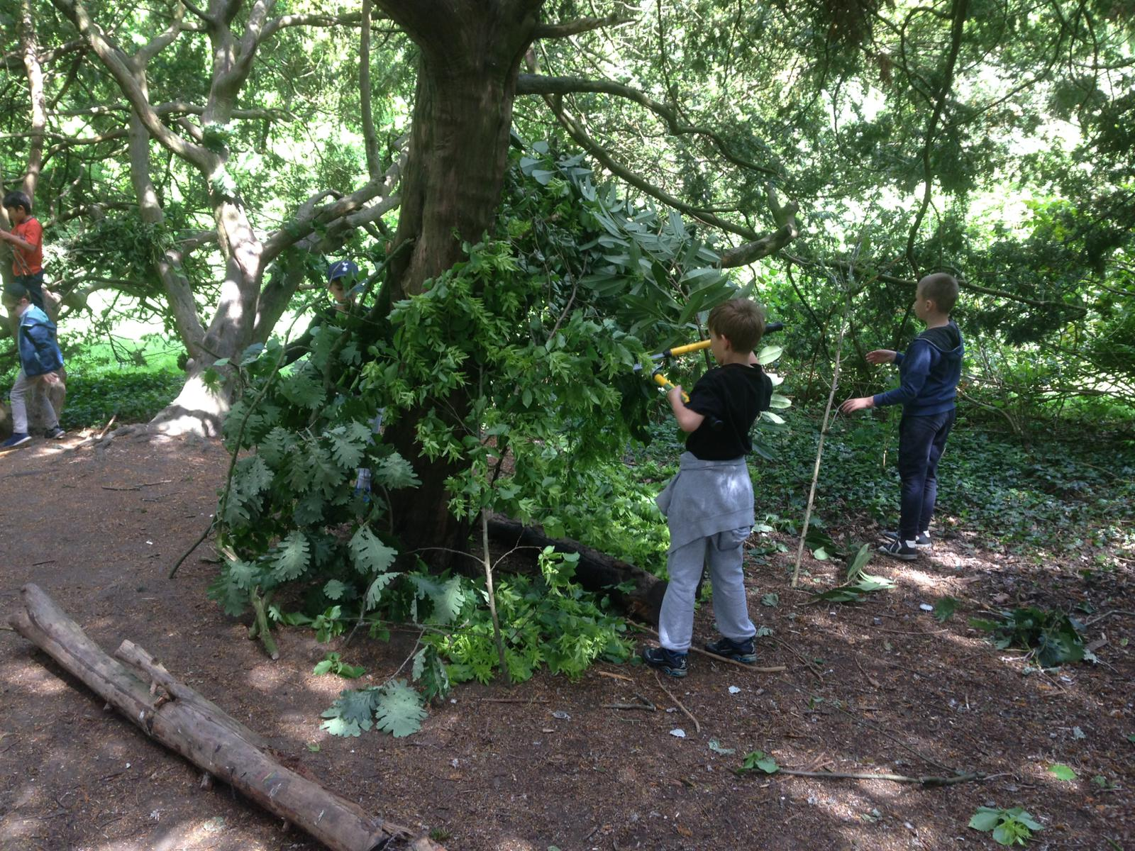 Summer Forest School Mornings banner image