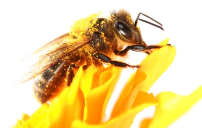 Eric Beaumont:  Beekeeper for a Day banner image