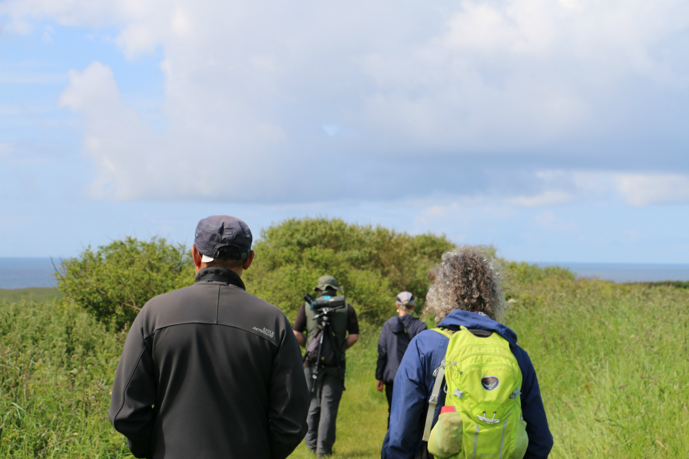 Hedgerows and Wildlife Surveying Workshop banner image